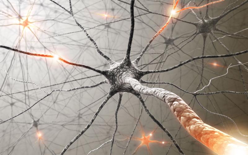 νευρώνες που αναπτύσσονται σε οποιαδήποτε ηλικία