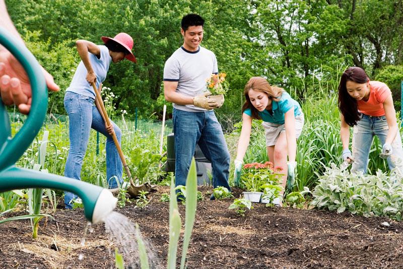 Πράσινη» θεραπεία: Πώς η κηπουρική βοηθά στην καταπολέμηση της κατάθλιψης -  PsychologyNow.gr